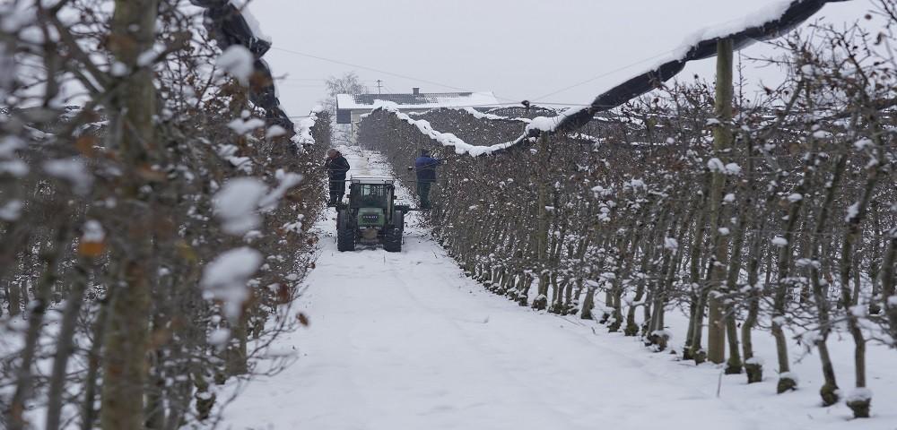 Winterschnitt 2