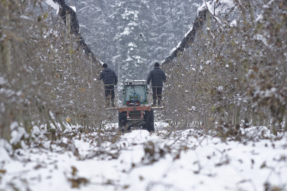 Winterschnitt aroma obst gmbh for Aroma agentur