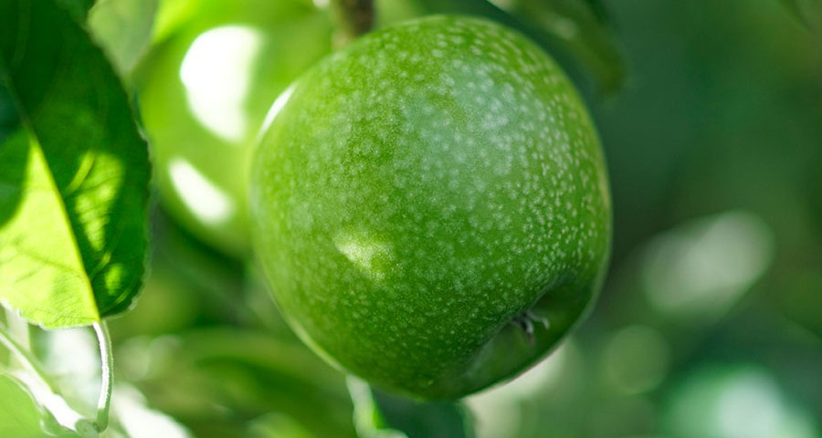 granny-smith-coverbild